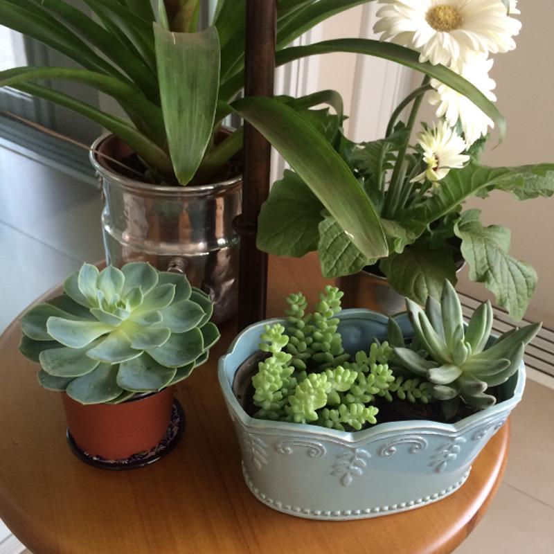 Jardinagem passo a passo para montar o seu vaso por for Plantas para estanques pequenos
